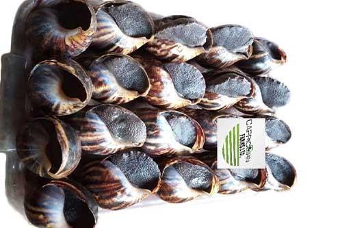 Fresh Snails- 20pcs Large Size (Local market)