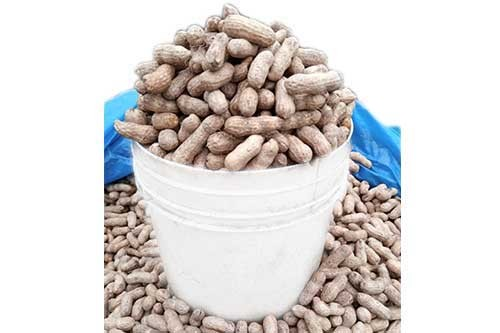 1594645694-h-250-Groundnut-Fresh-Raw.jpg