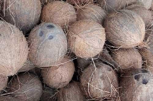 1595869886-h-250-coconuts.jpg