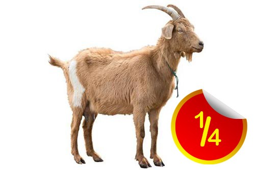 complete Goat- 24Hours delivery within lagos